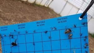 Silivri'deki Seralar Zararlılara Karşı Kontrol Altında