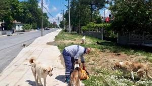 İBB Ekipleri, Silivri'de Sokak Hayvanları İçin Seferber