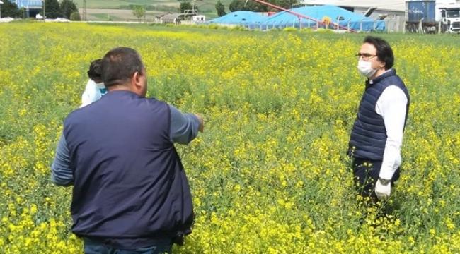 Silivri'de Kanola ve Yem Bitkileri Kontrolleri Devam Ediyor