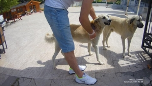 Kiptaş 1 Bölgesindeki Yaralı Köpek Tedavi Edildi