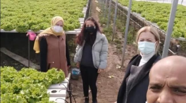 Değirmenköy'de topraksız marul üretimiyle fark yaratan üreticilere ziyaret