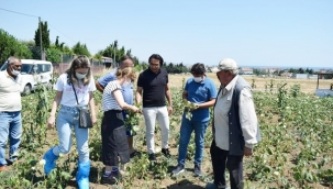 Selimpaşalı Bamya Üreticilerine İlçe Tarım Müdürlüğünden Zirai Destek