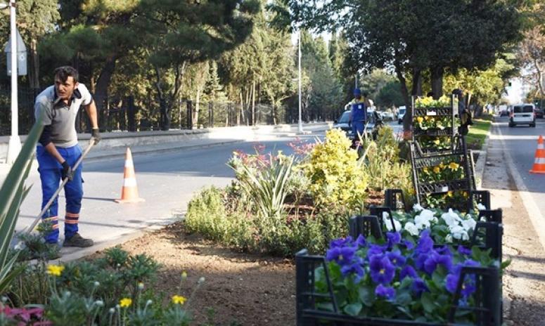 Silivri'de kışlık çiçek ekimi başladı