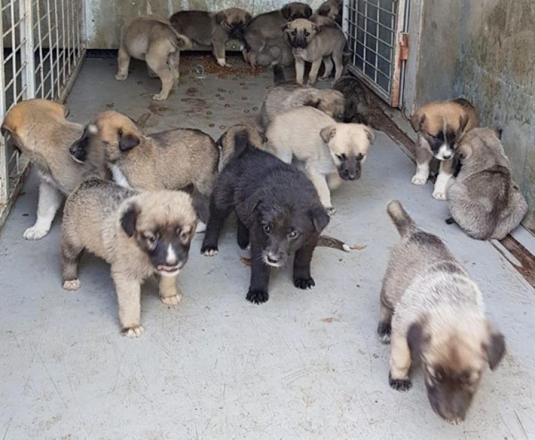 Binkılıç'ta ormana terk edilen yavru köpeklere, HAYKURDER sahip çıktı