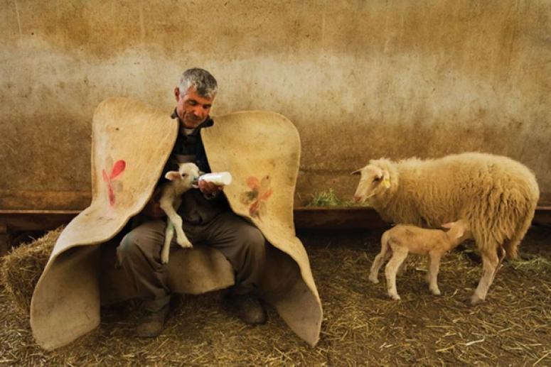 Silivri'de Çoban İstihdamına 5 Bin TL'lik Destek