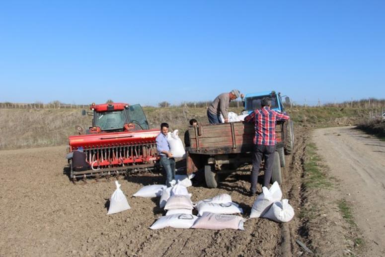 İBB, Silivri'de 45 dönüm arazide yerli tohum deneme ekimi gerçekleştirdi
