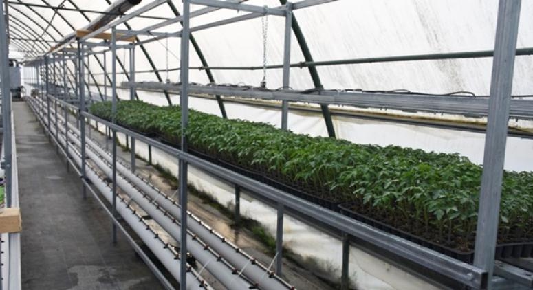 TÜRAM'da Topraksız Tarım Uygulamaları Başladı